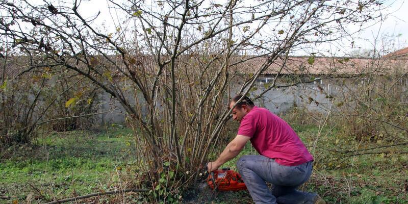6 dönümlük bahçedeki fındık ağaçlarınıkesti