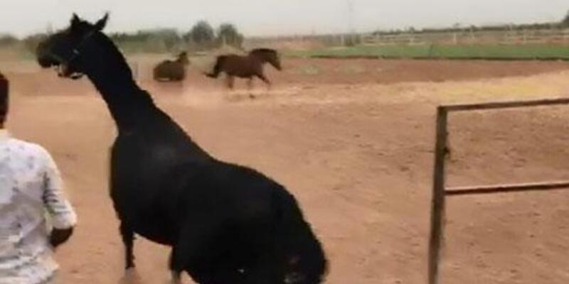 Şanlıurfa'daki yarış atlarının ölüm nedeni açıklandı