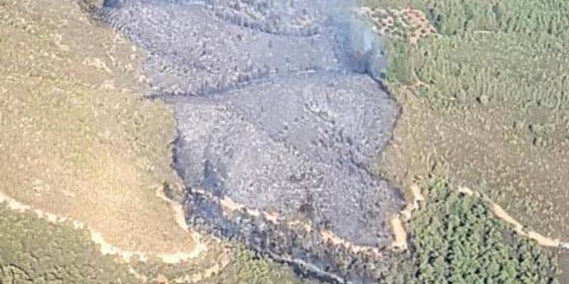 Marmaris'te ralli kazasında kül olan ormanlık alan ağaçlandırılıyor
