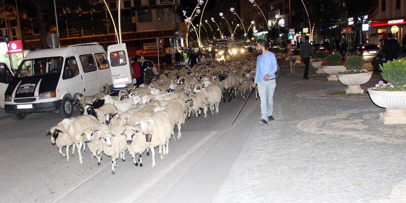 Yayladan dönen koyun sürüsü kent merkezinden geçti