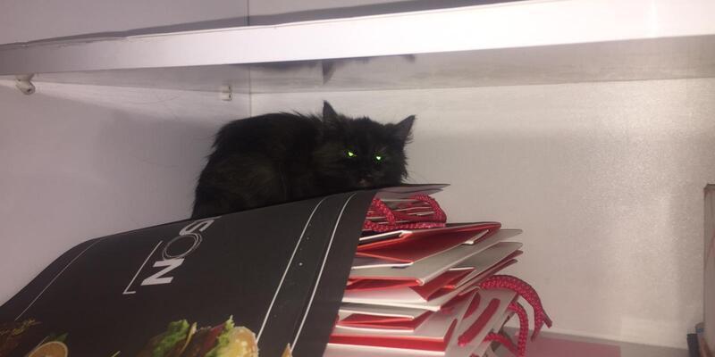Çatıda kargaların saldırdığı yavru kediyi kurtardılar