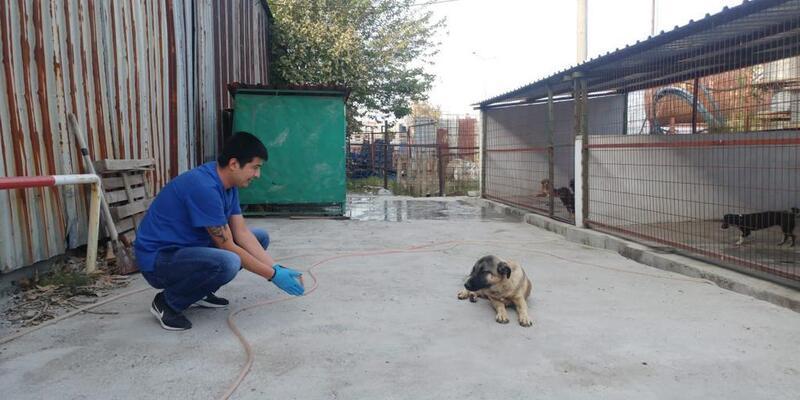Trenin çarpmasıyla yaralanan 2 köpek tedavi edildi