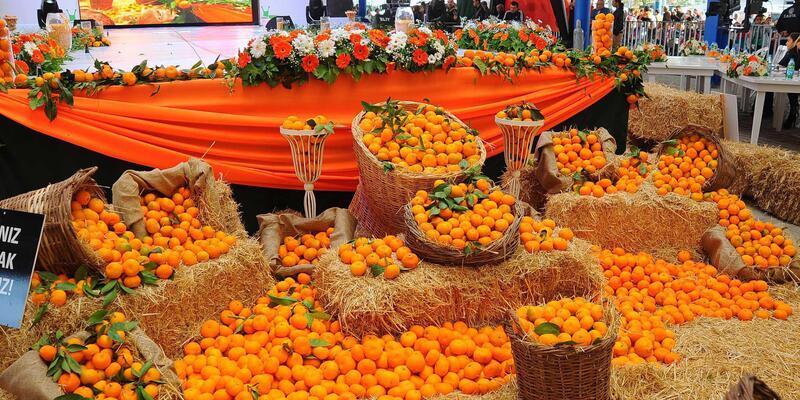 Seferihisar'da satsuma mandalina hasat edilecek