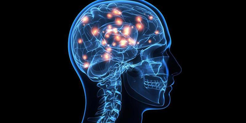 İnsan beyninde manyetik pusula keşfedildi