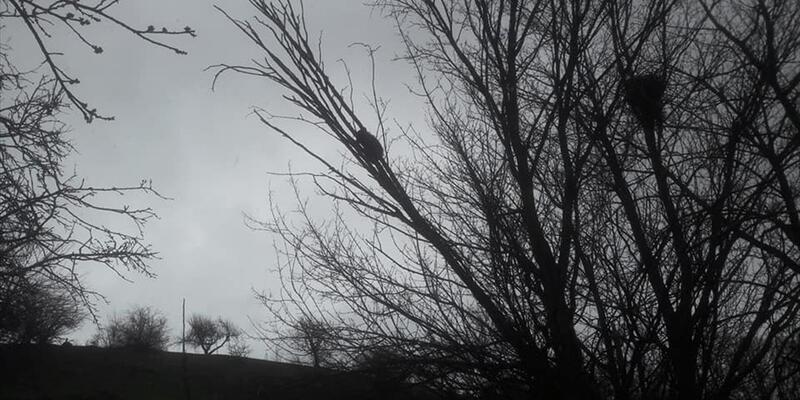 Ağaçta mahsur kalan yavru ayıyı kurtardı