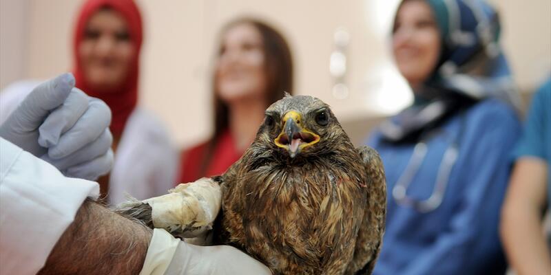 Yaralı kuşun kanadına kemik nakli