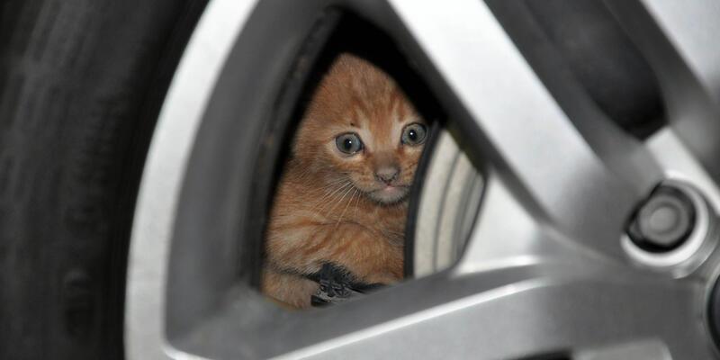 Otomobilin motoruna giren kediyi çıkarmak için seferber oldular