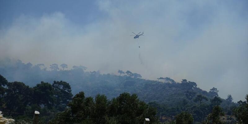 Balıkesir'de orman yangını