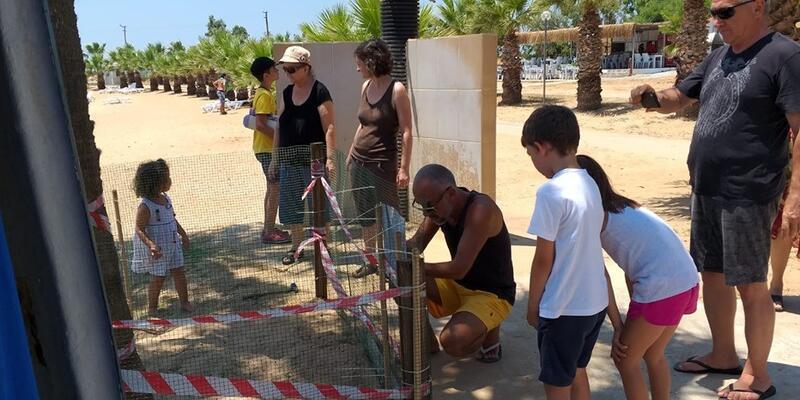 Caretta carettalar 3 yıl sonra yeniden Didim sahilinde