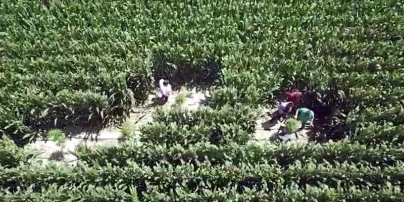 'Drone'lu kenevir operasyonu: Gözaltılar var