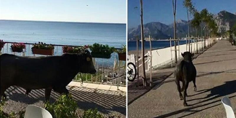 Kesime götürülürken sahile kaçmıştı! Ünlü sanatçı devreye girdi