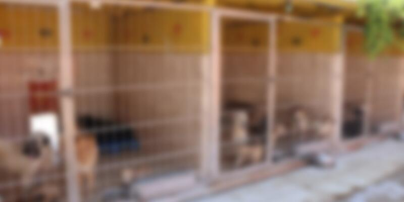 Antalya'da barınakta hayvanlara kötü muamele iddiası