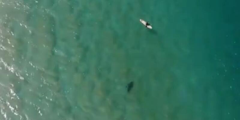 Köpek balığı saldırısını drone ile böyle engelledi