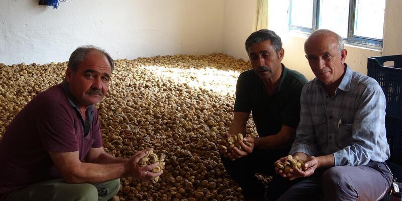 Tüccar fiyat kırdı, kuru incir depoda kaldı