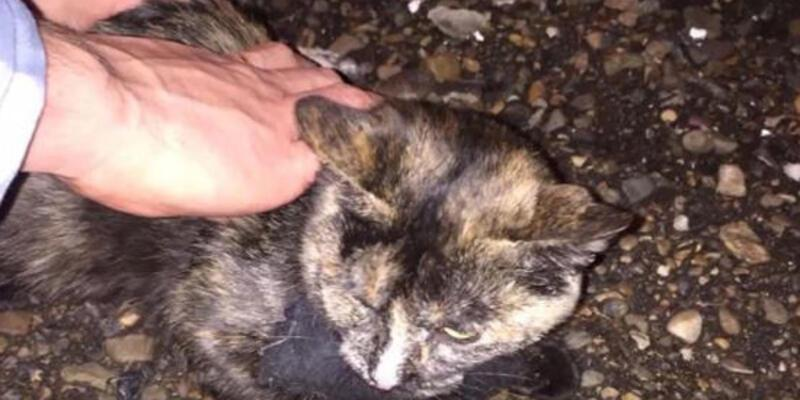 Rusya'da cezaevine uyuşturucu taşıyan kurye kedi gözaltına alındı