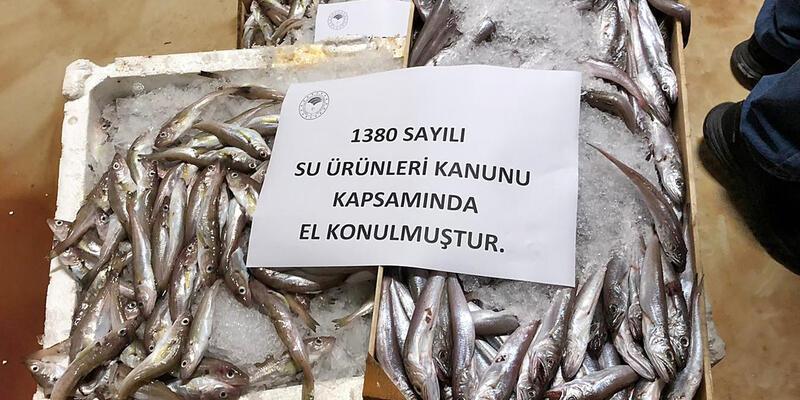 8,5 ton balığa el konuldu