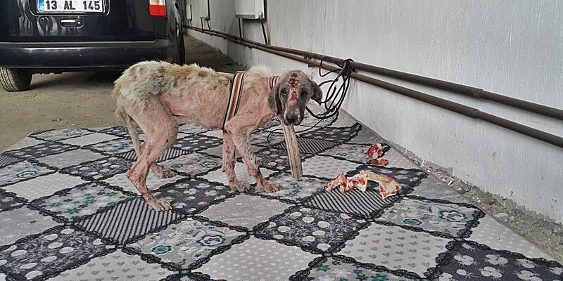Bulanık'ta köpeğe eziyette 3 belediye çalışanı açığa alındı