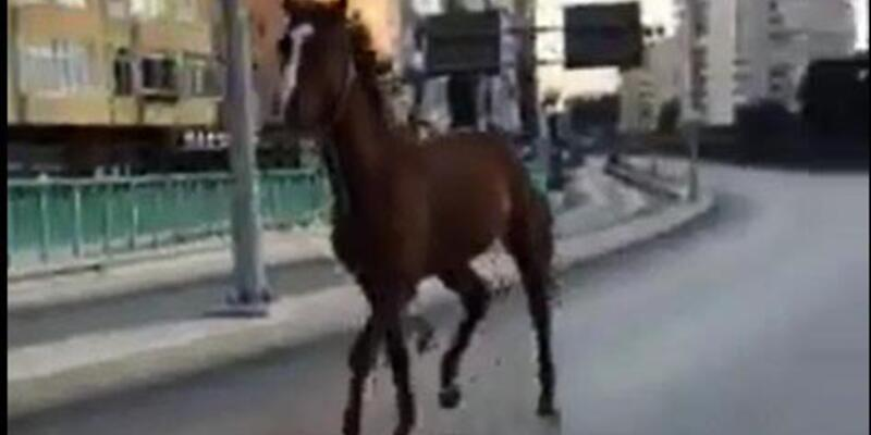 Ana caddede başıboş koşan at şaşırttı