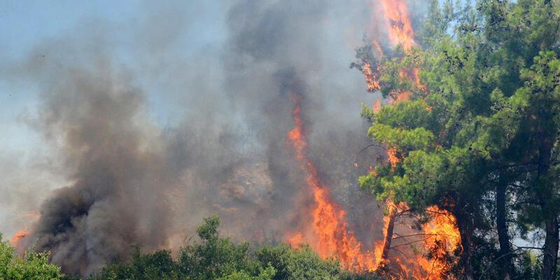Antalya'da orman yangını bilançosu: 233 hektar alan kül oldu