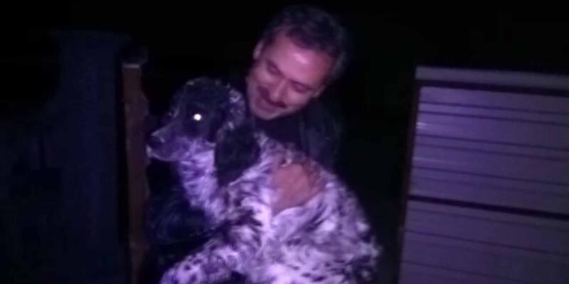 Köpek hırsızları yakalandı