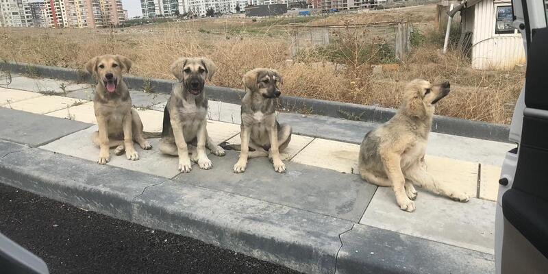 Atık yemeklerle 200 köpeği besliyorlar