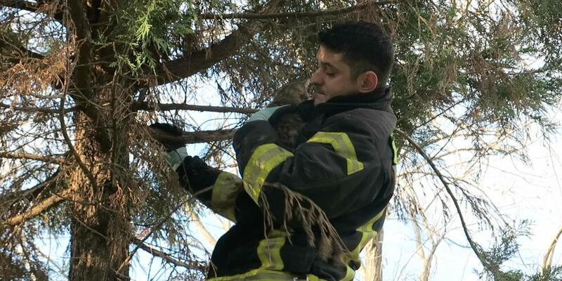 Ağaçta kalan kediyi itfaiye kurtardı