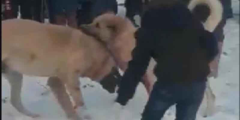 Köpek dövüşünü 'WhatsApp' üzerinden organize etmişler