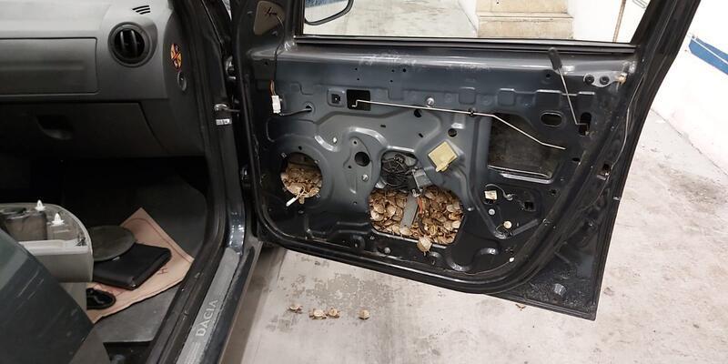 Aracın içinden 5 bin kaplumbağa çıktı