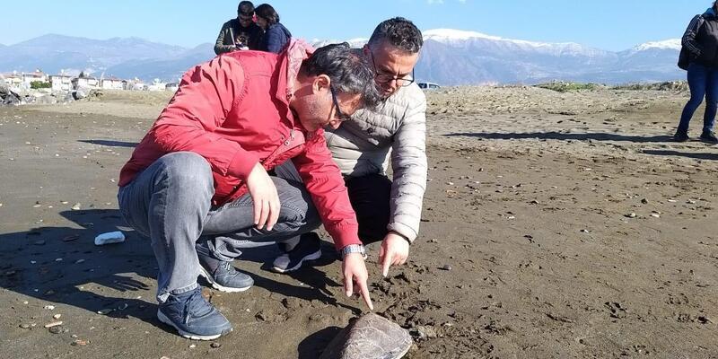 Nesli tehlike altındaki yeşil kaplumbağa kıyıya vurdu