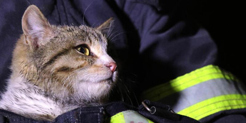 İtfaiye ekipleri yanan evden yavru kediyi kurtardı