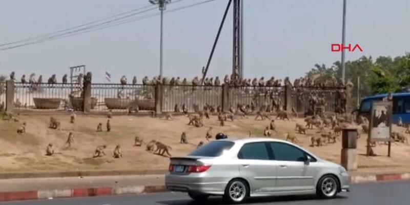 Maymunlar sokakları istila etti!