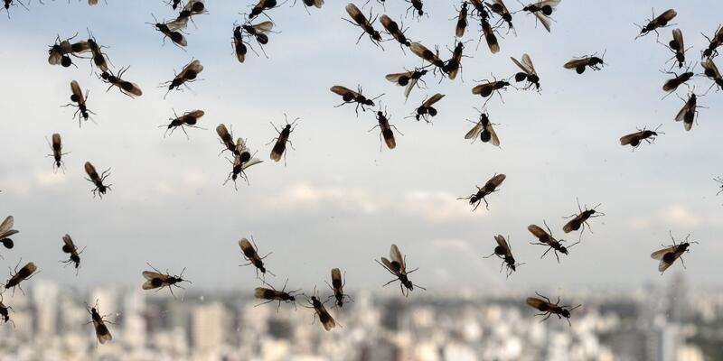 Karınca istilası kıyamet alameti mi? Kur'an'da karınca ayetleri
