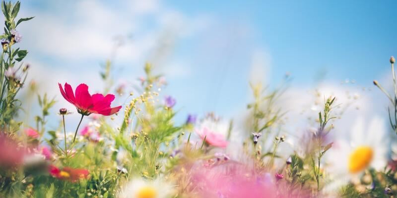 """İlkbahar başlangıcı ne zaman? Google'dan """"İlkbahar geldi!"""" doodle'ı"""