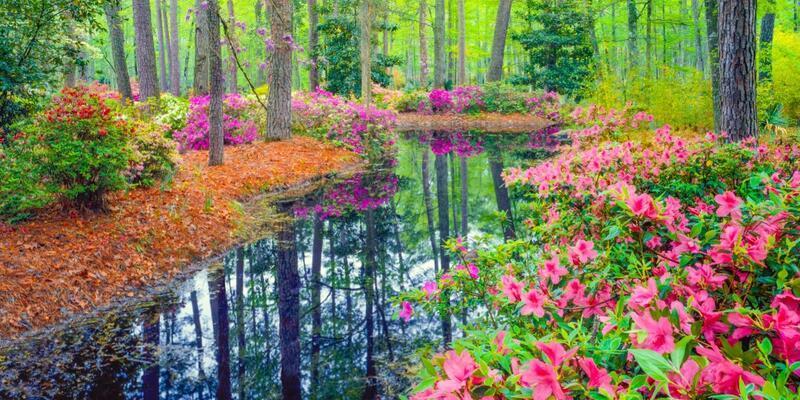 21 Mart ekinoksu ve Nevruz nedir? 21 Mart baharın başlangıcı