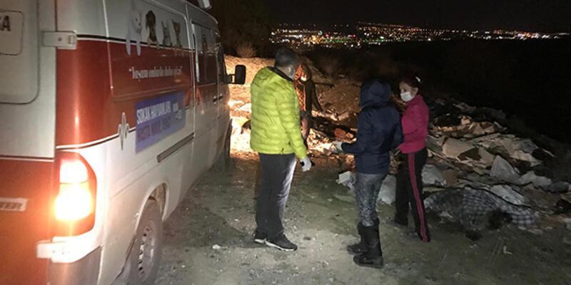 Ankara'da çuvalların içinde ölü köpekler bulundu
