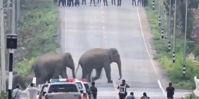 Tayland'da caddeyi basan fil sürüsü görüntülendi