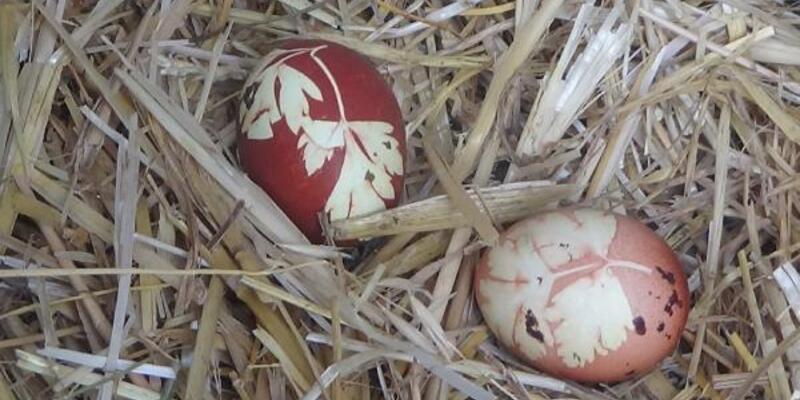 Maydanoz desenli yumurta yumurtladı