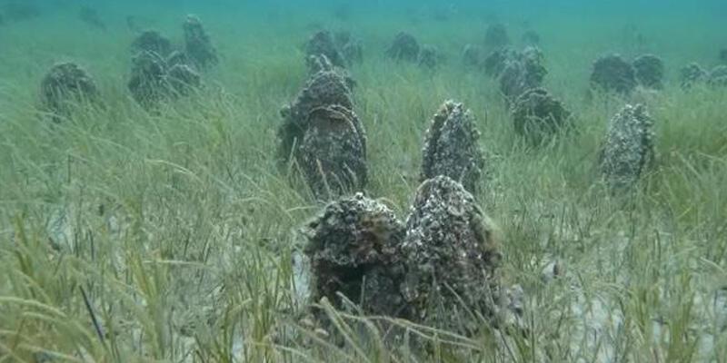 Çanakkale Boğazı'nda 'Pina' mezarlığı görüntülendi