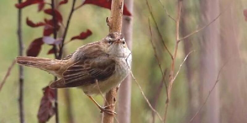Hersek Lagünü'nde kuş türü sayısı 224'e çıktı