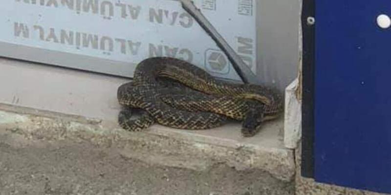 İş yeri önündeki 2 metrelik yılanı belediye ekibi yakaladı