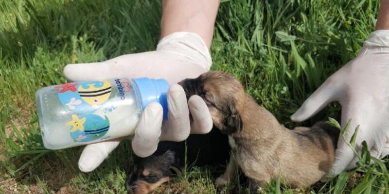 Ölüme terk edilen yavru köpekler kurtarıldı