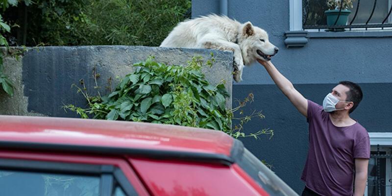 Sosyal medya 10 yıldır sokağı seyreden köpeği konuşuyor