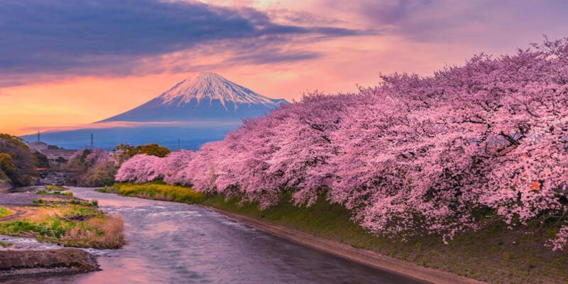 Başakşehir Şehir Hastanesi'ne adı verilen sakura nedir, sakura ne demek?