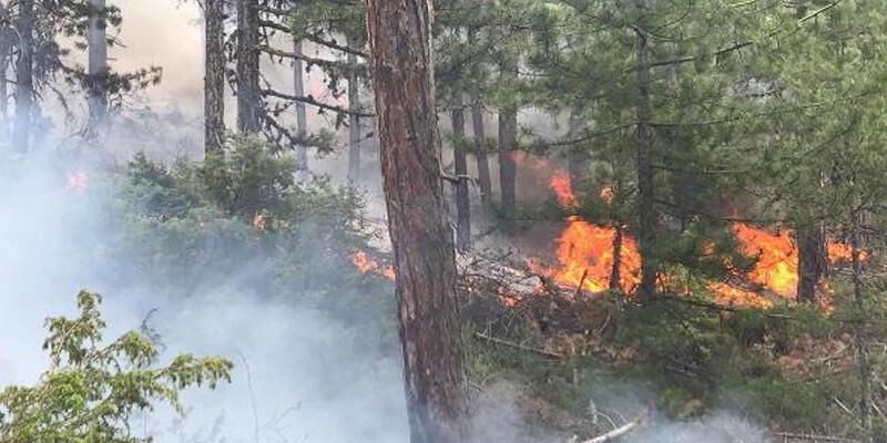 Son dakika... Uşak'ta orman yangını!