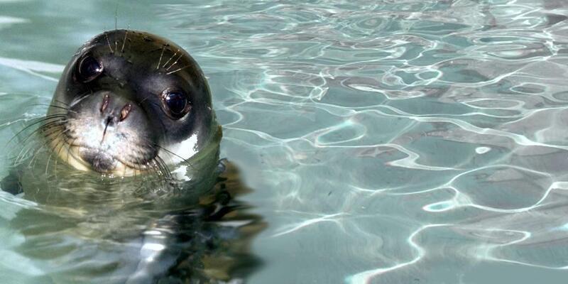 Akdeniz foklarının üreme alanındaki çalışmaya ceza