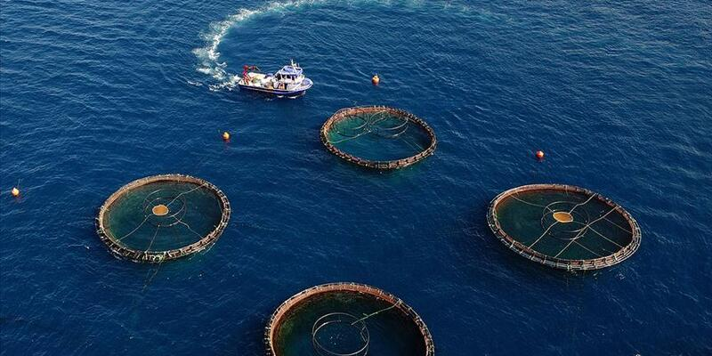Su ürünlerinde ihracat 1 milyar doları aştı