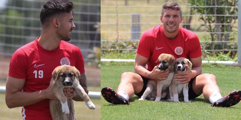 Antalyaspor sokağa terk edilen iki köpek yavrusunu sahiplendi