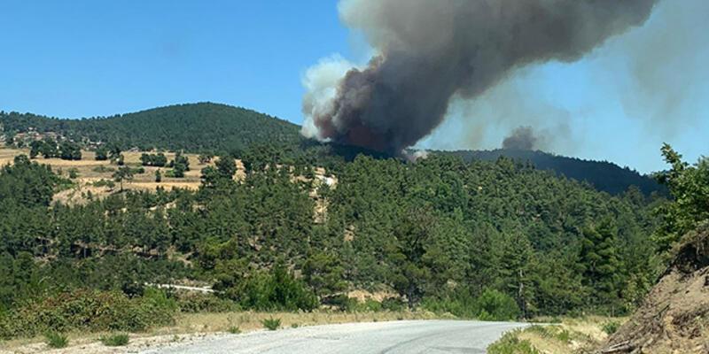 Son dakika... Çanakkale'de orman yangını!