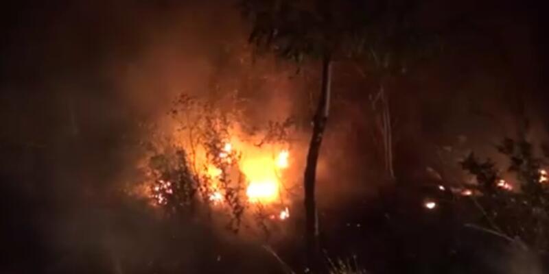 Son dakika haberi... İstanbul'da ağaçlık alanda yangın