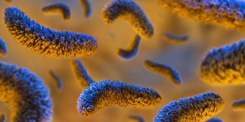 Salmonella nedir? Nasıl bulaşır?